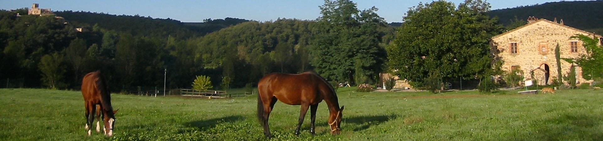 Grasende Pferde vor Haus